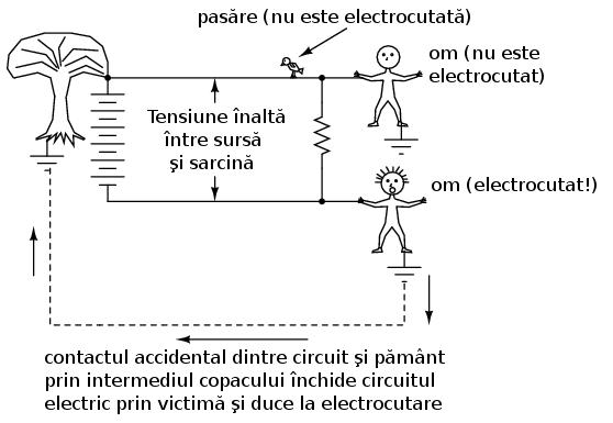 circuitul interior al pierderilor de grăsime)